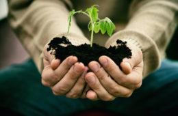 Gardener with vegetable seedling. Spring garden. Plant seedling in farmers hands.