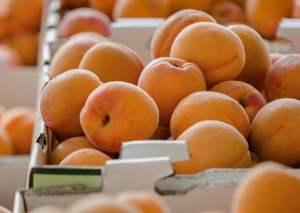 kettleman-apricots-froghollow-1080x1100b